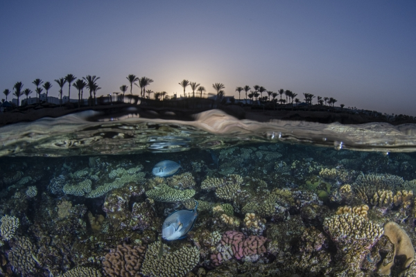 fishinfocus, Mario Vitalini, Red Sea, split shot, underwater photography