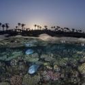 fishinfocus, Mario Vitalini, Red Sea, split shot, underwater photography