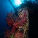 fishinfocus, Giannis D wreck, Mario Vitalini, underwater photography