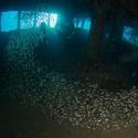 fishinfocus, Mario Vitalini, underwater photography, wreck Giannis D