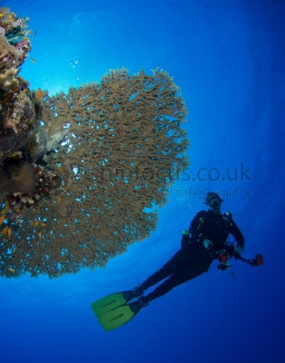 diver, fishinfocus, Mario Vitalini, OMD, Red Sea