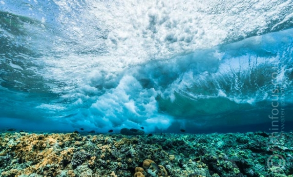 fishinfocus, Mario Vitalini, OMD, Red Sea, reef, waves