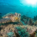 fishinfocus, Komodo, Mario Vitalini, OMD, turtle