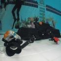 fishinfocus level 1 intro to underwater photography, Mario Vitalini