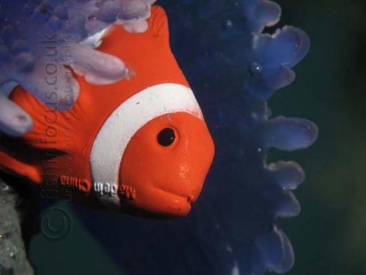 fishinfocus underwater photography reef, Mario Vitalini