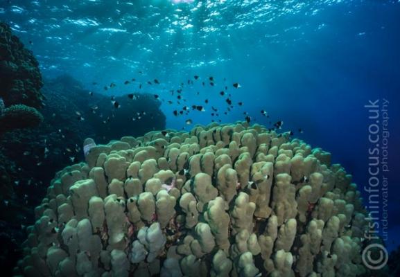 fishinfocus, hard coral reef Red Sea, Mario Vitalini, trips, workshops