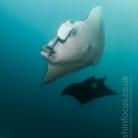 fishinfocus, manta Komodo, Mario Vitalini, trips, workshops