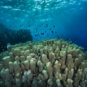 fishinfocus, hard coral reef Red Sea, Mario Vitalini, trips, workshops